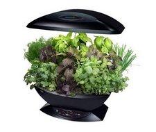 ... Des Tomates, Un Véritable Petit Potager Dans Votre Cuisine, Je Crois  Bien Que ça Va être Possible Grâce à Ce Petit Jardin Du0027intérieur Automatisé  ...